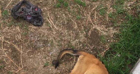 vecinos denuncian envenenamiento masivo de perros en estado de mexico 1