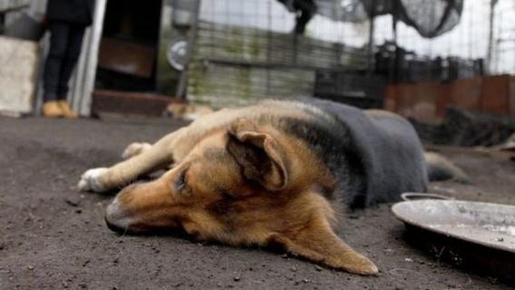 vecinos denuncian envenenamiento masivo de perros en estado de mexico 3