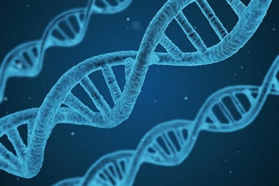 desarrollantecnicadeediciongeneticaqueevitamutaciones 1