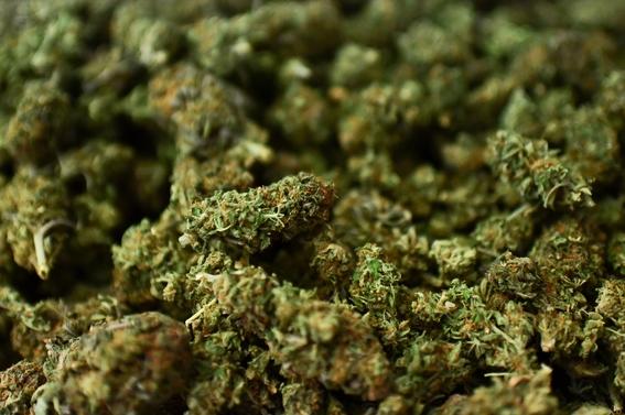 marihuanacannabispruebasmasantiguaschina 2