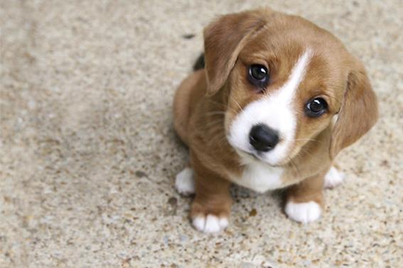 descubre como hacen los perros para enternecer a las personas y ganarse asi su afecto 1