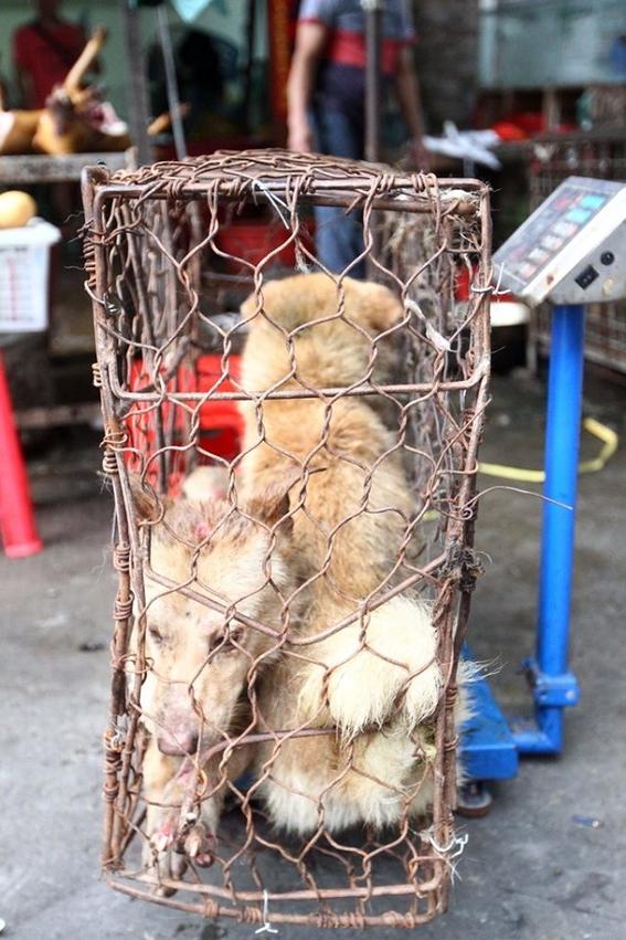 festival de la carne de perro y gato de yulin china 1