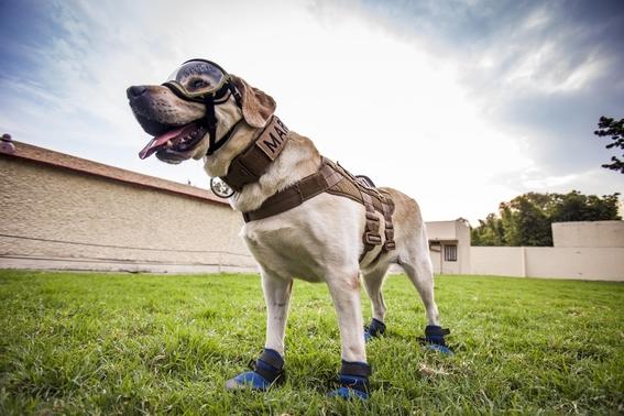 frida la extranable perrita que participo en el rescate de victimas del 19s de 2017 se jubilo en la unidad canina de la secretaria de marina 2