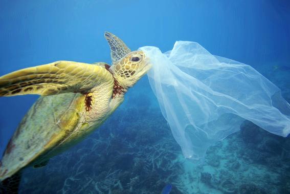 esta celebracion busca crear conciencia acerca del dano que causan las bolsas de plastico de un solo uso al medio ambiente ¡unete a la celebraci 1