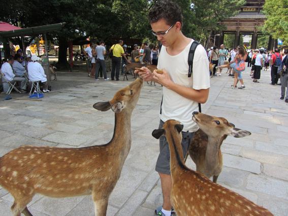 mueren ciervos al comer plastico que tiran los turistas en japon 1