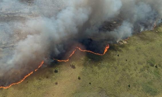 ¡dos mil hectareas de reserva natural se estan quemando en quintana roo 1