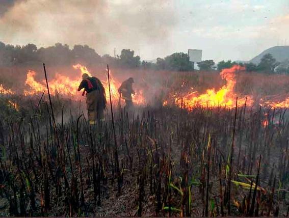 ¡dos mil hectareas de reserva natural se estan quemando en quintana roo 3