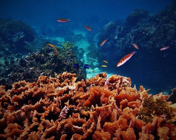 los cientificos atribuyen la decoloracion de los corales al exceso de nitrogeno que seria el causante de la muerte de los arrecifes de coral 1