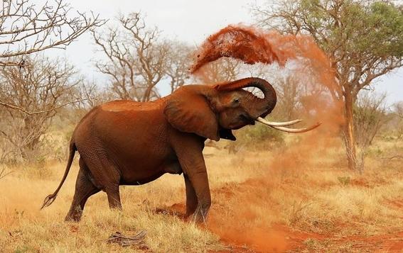 extinciondeelefantesafricanosdebosqueagudizariacambioclimatico 3