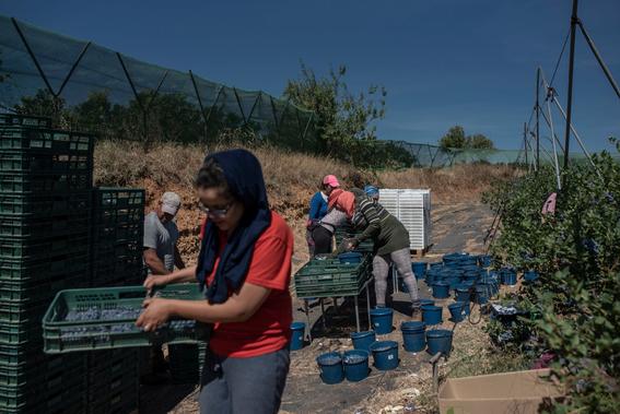 hostigamiento y abuso sexual asi viven las recolectoras de fresa en espana 1