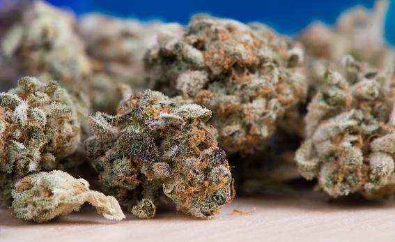 sembrando vida marihuana mexico 3