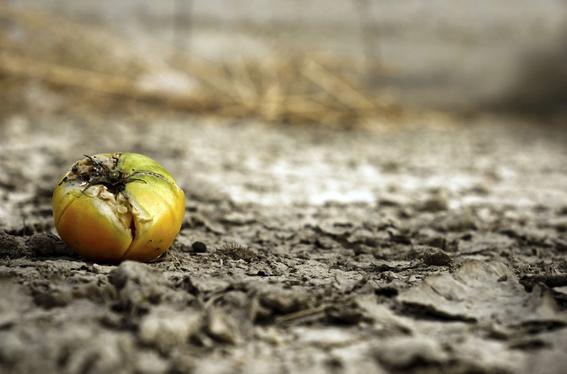 debemos cambiar nuestra forma de comer para combatir cambio climatico 2