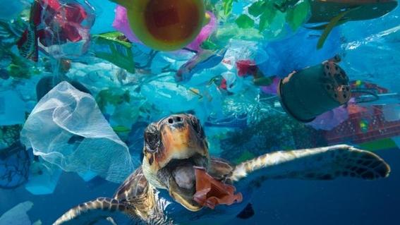 tortugasverdescomenplasticoporqueloconfundenconsucomida 2