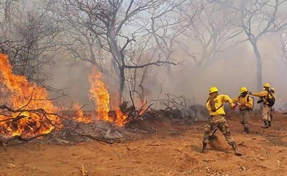 las selvas tropicales de la amazonia en brasil llevan 16 dias ardiendo a una velocidad record; expertos advierten sobre riesgos que provoca la de 1