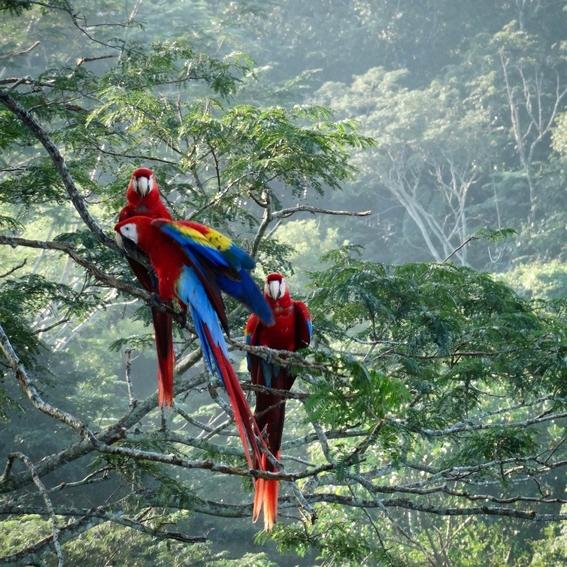 asesinan a ambientalista que defendia a la guacayama roja en chiapas 2
