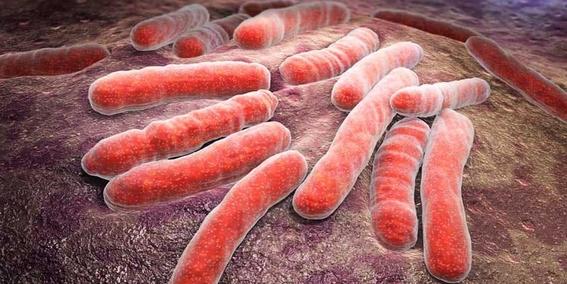 desarrollanvacunaparaquelospulmonesseaninmunesfrentaatuberculosis 1