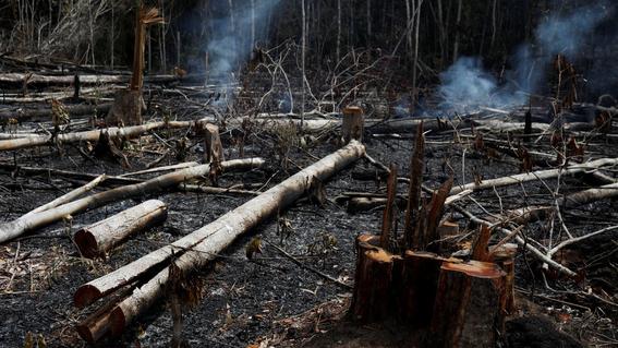 entre 20 y 40 anos tardara el amazonas en recuperarse tras incendio 1