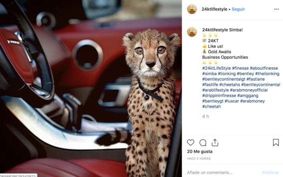 contrabando de guepardos ultraricos golfo arabe 1