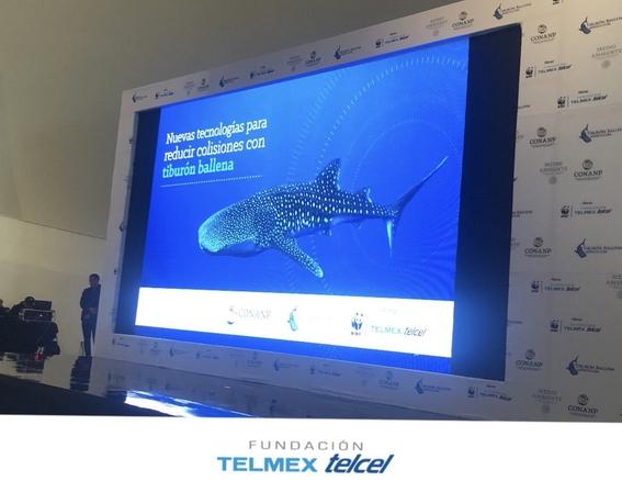 dia internacional del tiburon ballena 4