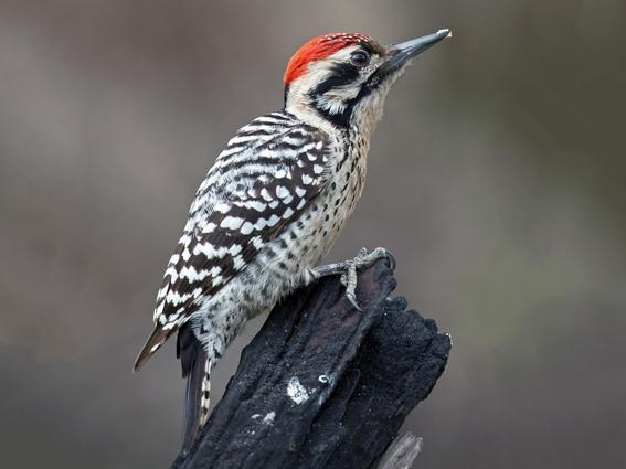 las autoridades dedicadas al cuidado del medio ambiente en la cdmx descubrieron 19 nuevas especies de aves en un area natural protegida de la alc 1