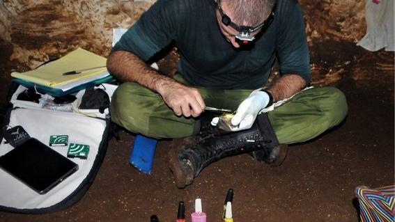 hacen manicure a murcielagos en peligro de extincion para preservarlos 1