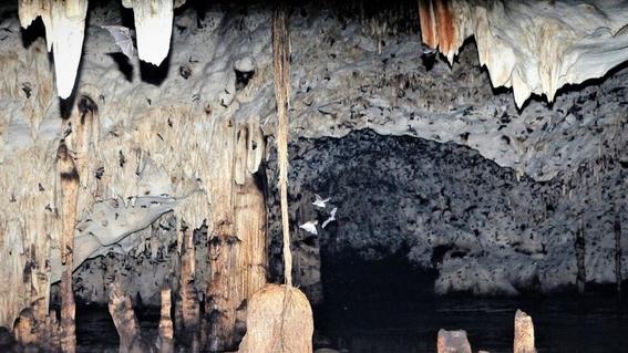 hacen manicure a murcielagos en peligro de extincion para preservarlos 2