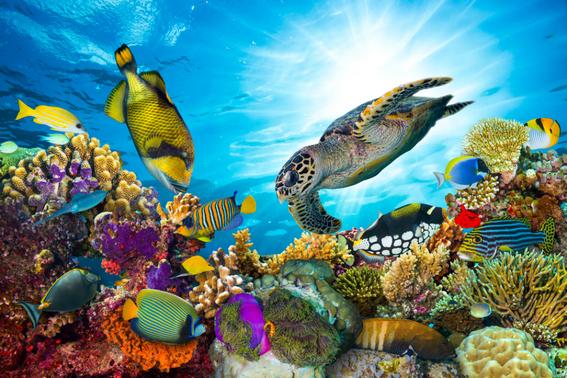 los arrecifes de palancar colombia y el cielo de cozumel cerraran temporalmente sus puertas como estrategia de proteccion ante el sindrome blan 1