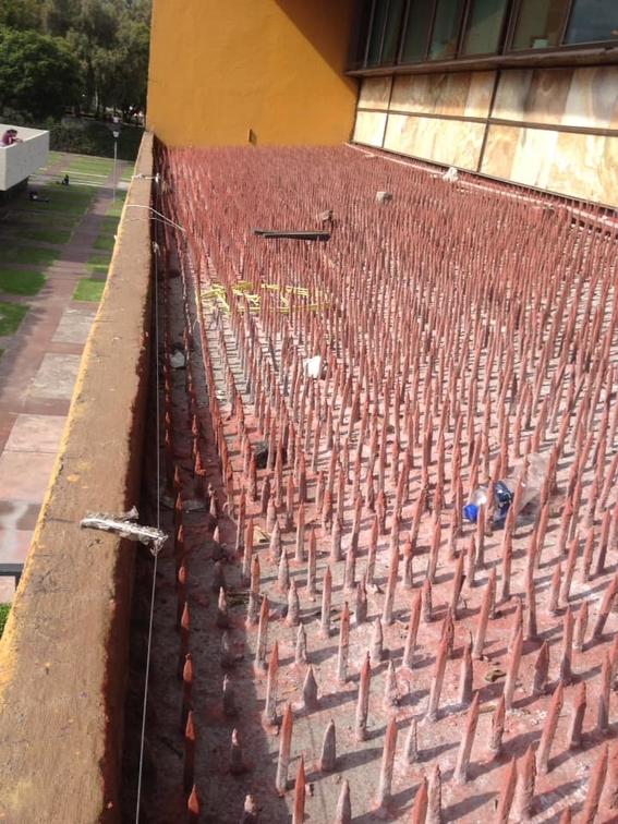 un grupo de docentes de la unam publico fotos en redes sociales en las que muestran uno de los techos de las oficinas de rectoria lleno de picos 1