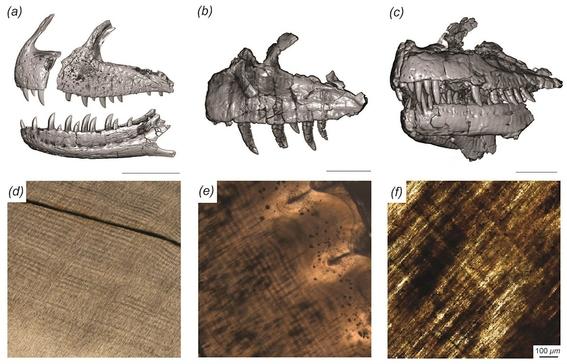 el majungasaurus reemplazaba todos sus dientes cada dos meses mas o menos un hecho sin precedentes entre los dinosaurios carnivoros 1