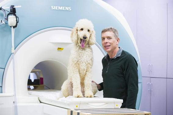 los perros usan una parte similar de su cerebro para procesar numeros de objetos como los humanos y necesitan ser entrenados para hacerlo 1