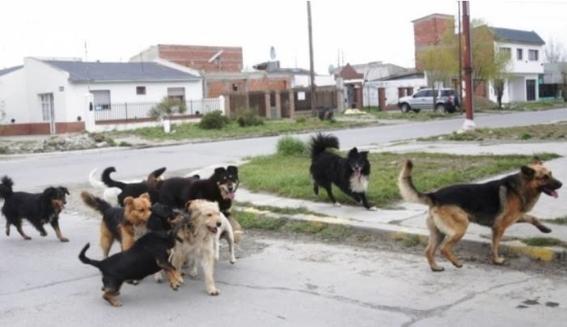 los perros usan una parte similar de su cerebro para procesar numeros de objetos como los humanos y necesitan ser entrenados para hacerlo 2