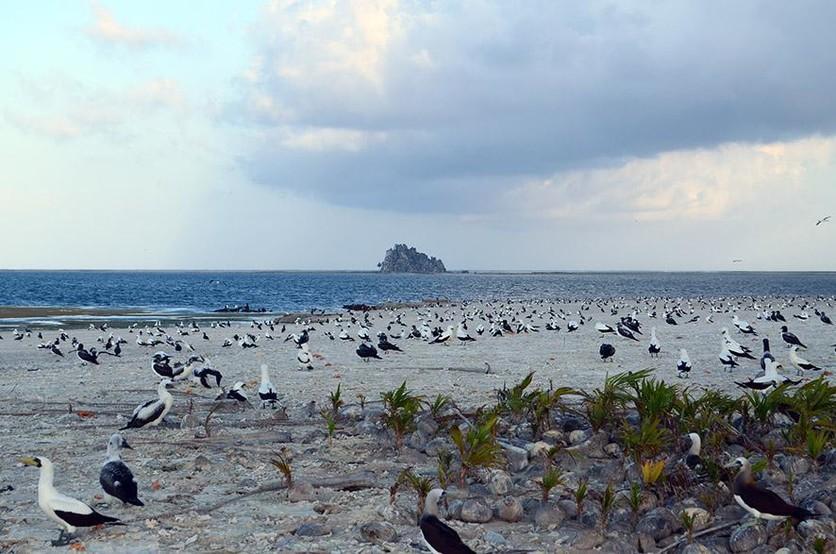 La historia de tragedia de la isla que Francia quitó a México y está deshabitada 2