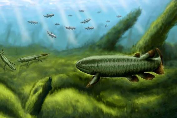 mediante una tomografia computarizada se logro examinar la forma y estructura de los rayos de las aletas de peces fosilizados 1