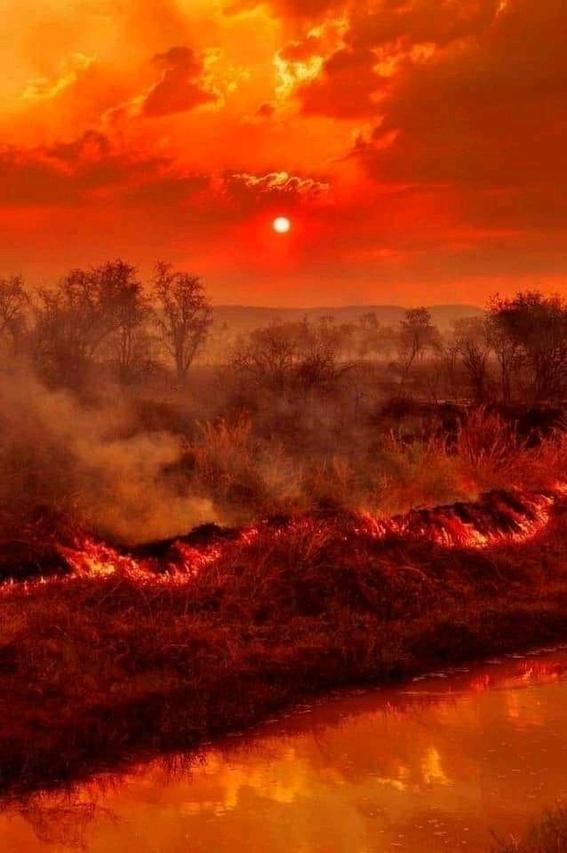 los incendios que han ocurrido en australia desde el pasado mes de septiembre se han cobrado las vidas de unos 480 millones de animales 2