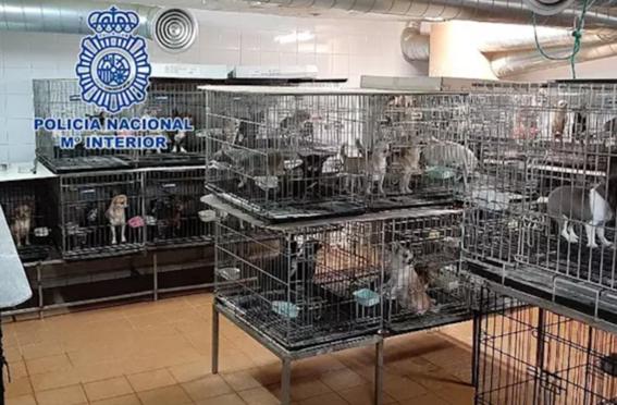 en el operativo fueron detenidos dos veterinarios que cortaban las cuerdas vocales a los perros para que no pudieran ladrar y asi molestar a los  1