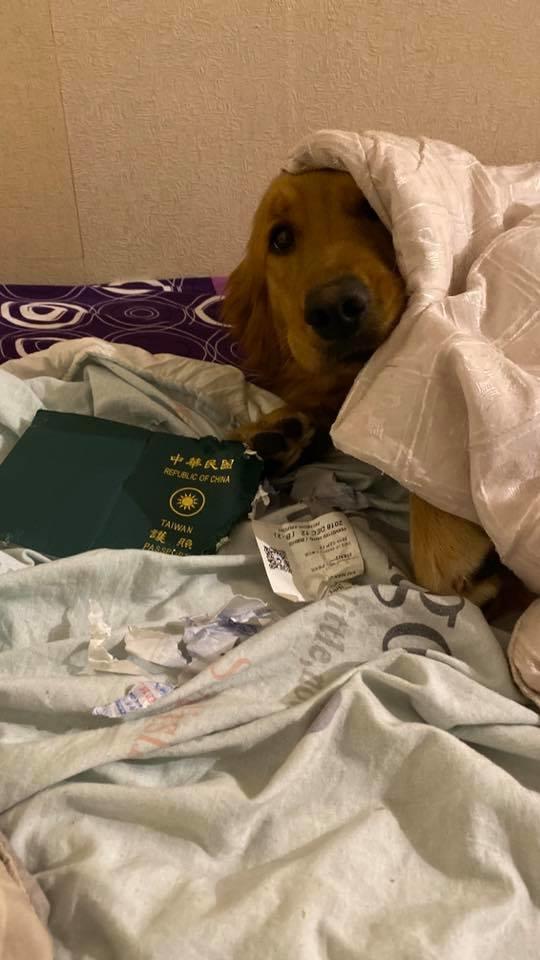 perra salva a duena de coronavirus come pasaporte taiwan 1