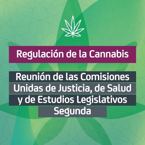 en comisiones senadores aprobaron en lo general el proyecto en materia de regulacion del cannabis 2