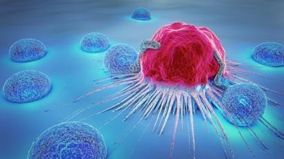 cientificos apuestan a que un invertebrado marino es el medio para lograr la cura contra el cancer el vih y el alzheimer 1