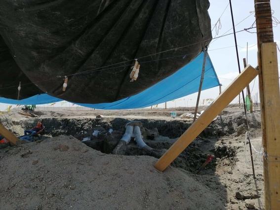 encuentran restos de 60 mamuts en santa lucia 1