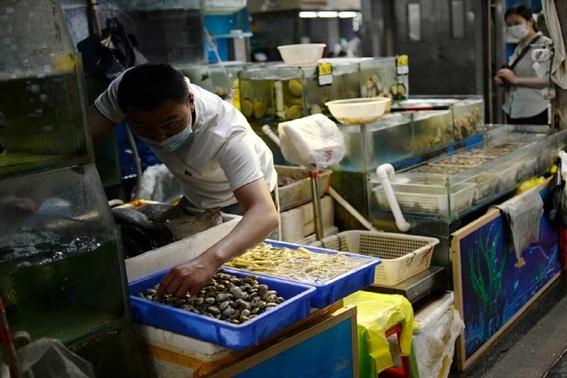¿por que culpan al salmon por nuevo rebrote de covid19 en pekin 2