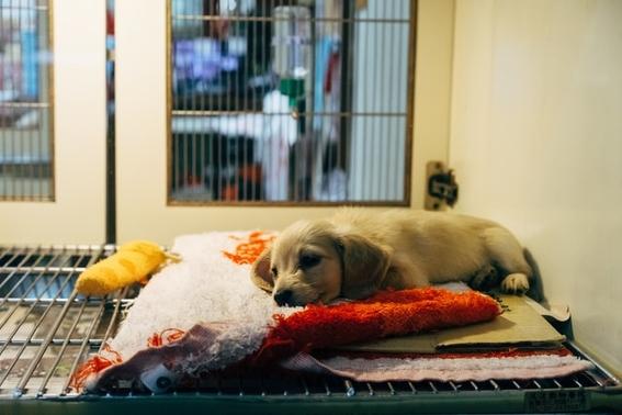 carne de perros corea del norte 1
