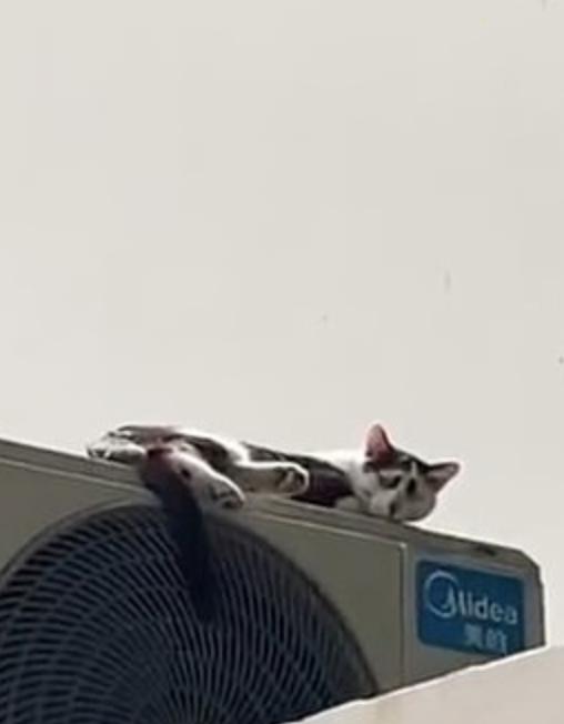 gato mas triste del mundo 2