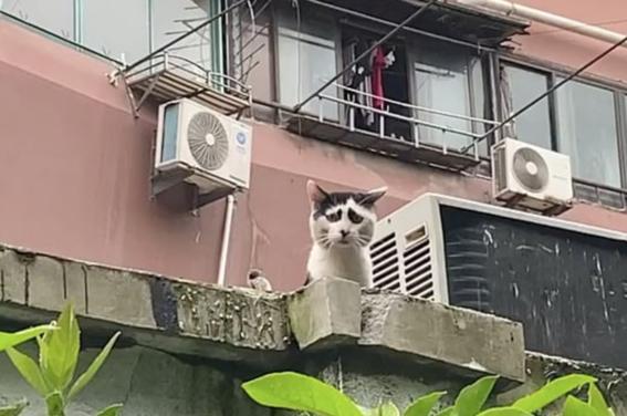 gato mas triste del mundo 3