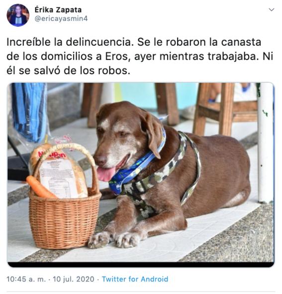 asaltan a perro que entregaba despensas durante la pandemia en colombia 1