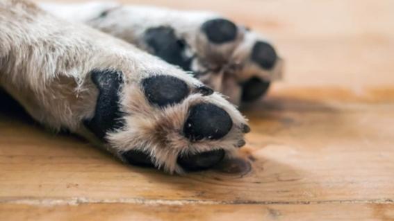 perrita muere tras ser clavada de sus patas contra una madera 1