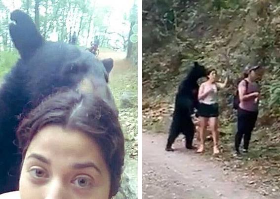 oso en chipinque 2