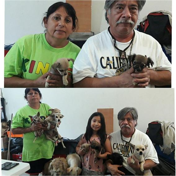 familia rescata perros reynosa tamaulipas 2