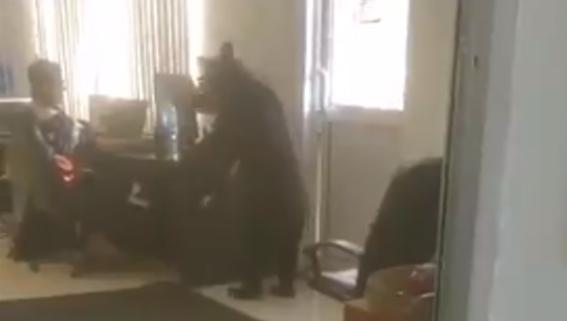 oso oficina video 1