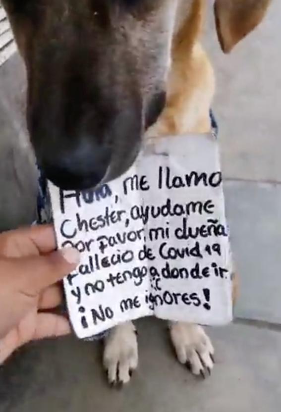 perro chester duena muere covid19 2