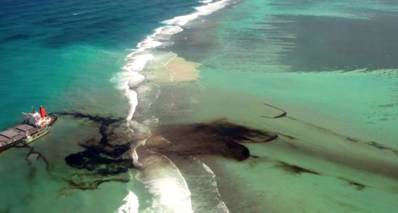 mama de delfin muere al intentar salvarlo de un derrame de petroleo 1